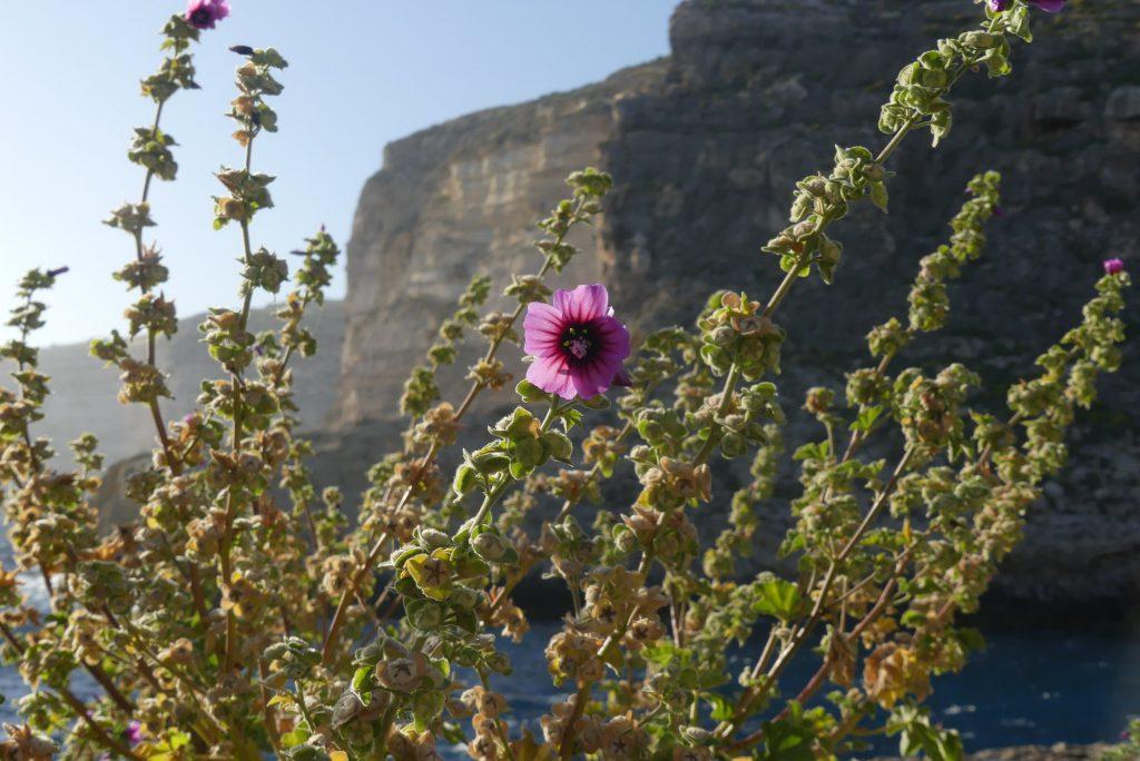 Xlendi auf Gozo Malta