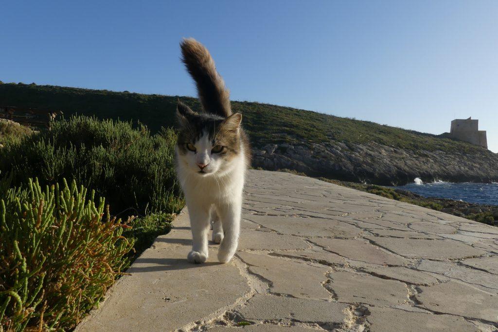 Katze in Xlendi auf Gozo Malta