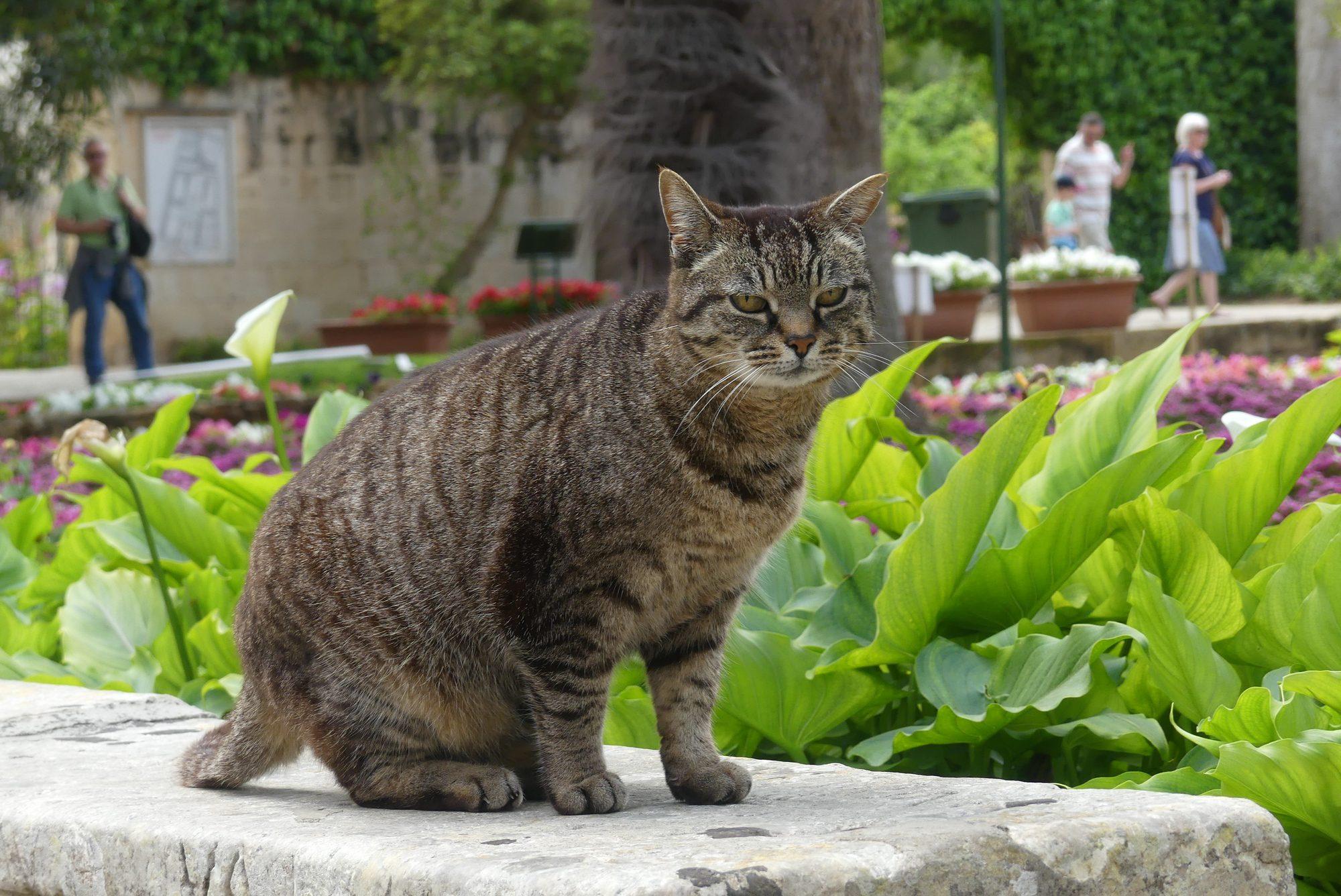 Katze im St. Anton Gardens auf Malta