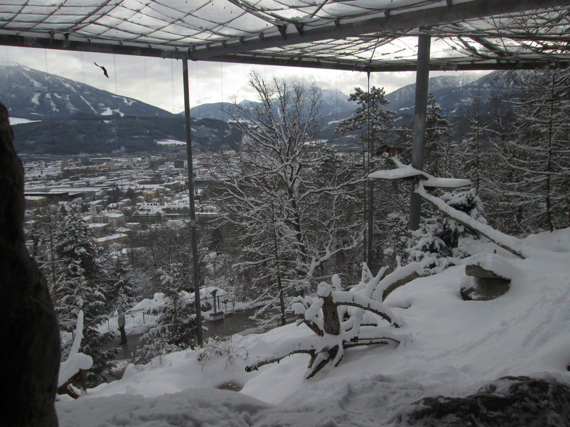 Bartgeiervoliere Alpenzoo Innsbruck