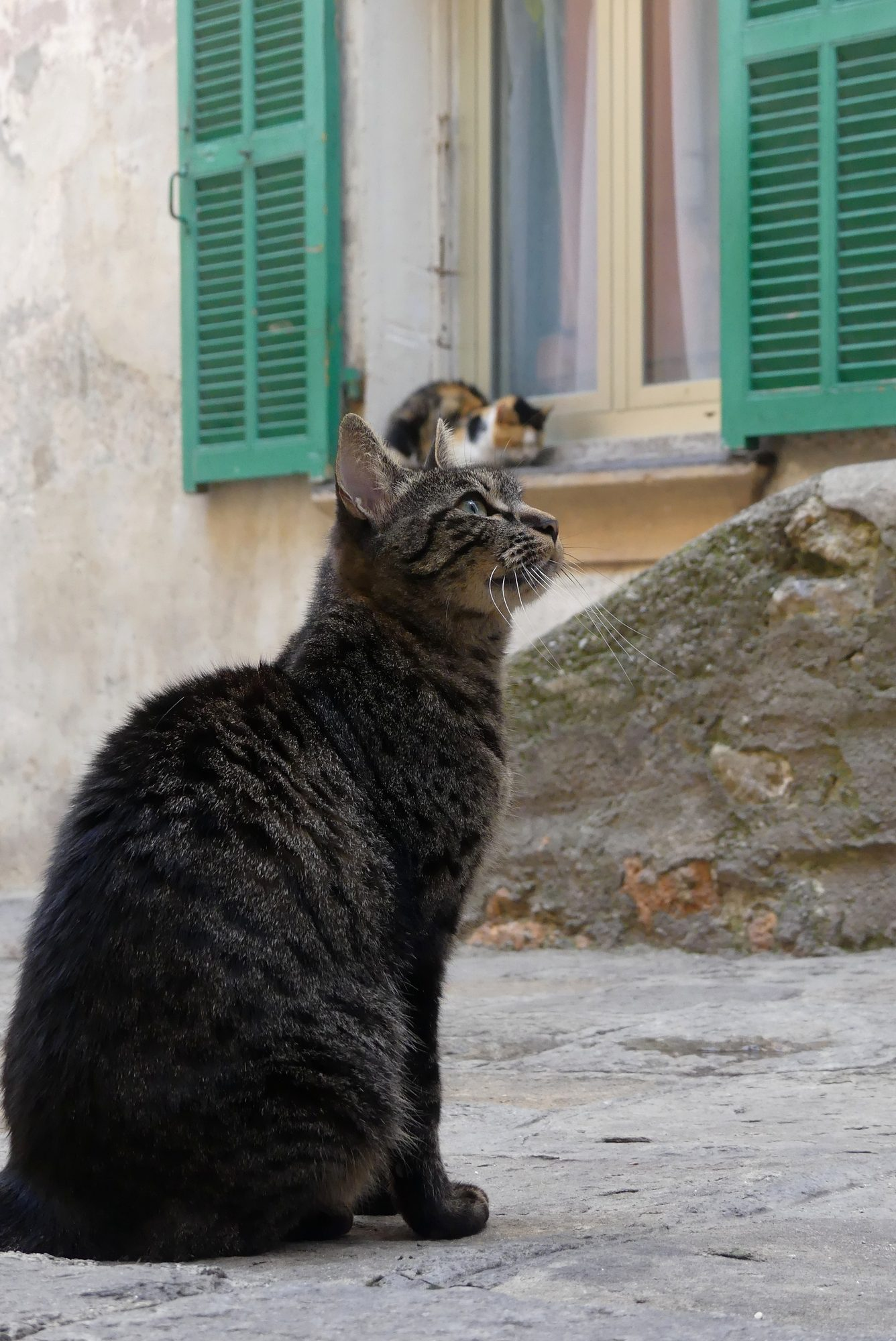 Katze in der Altstadt von Ventimiglia Italien