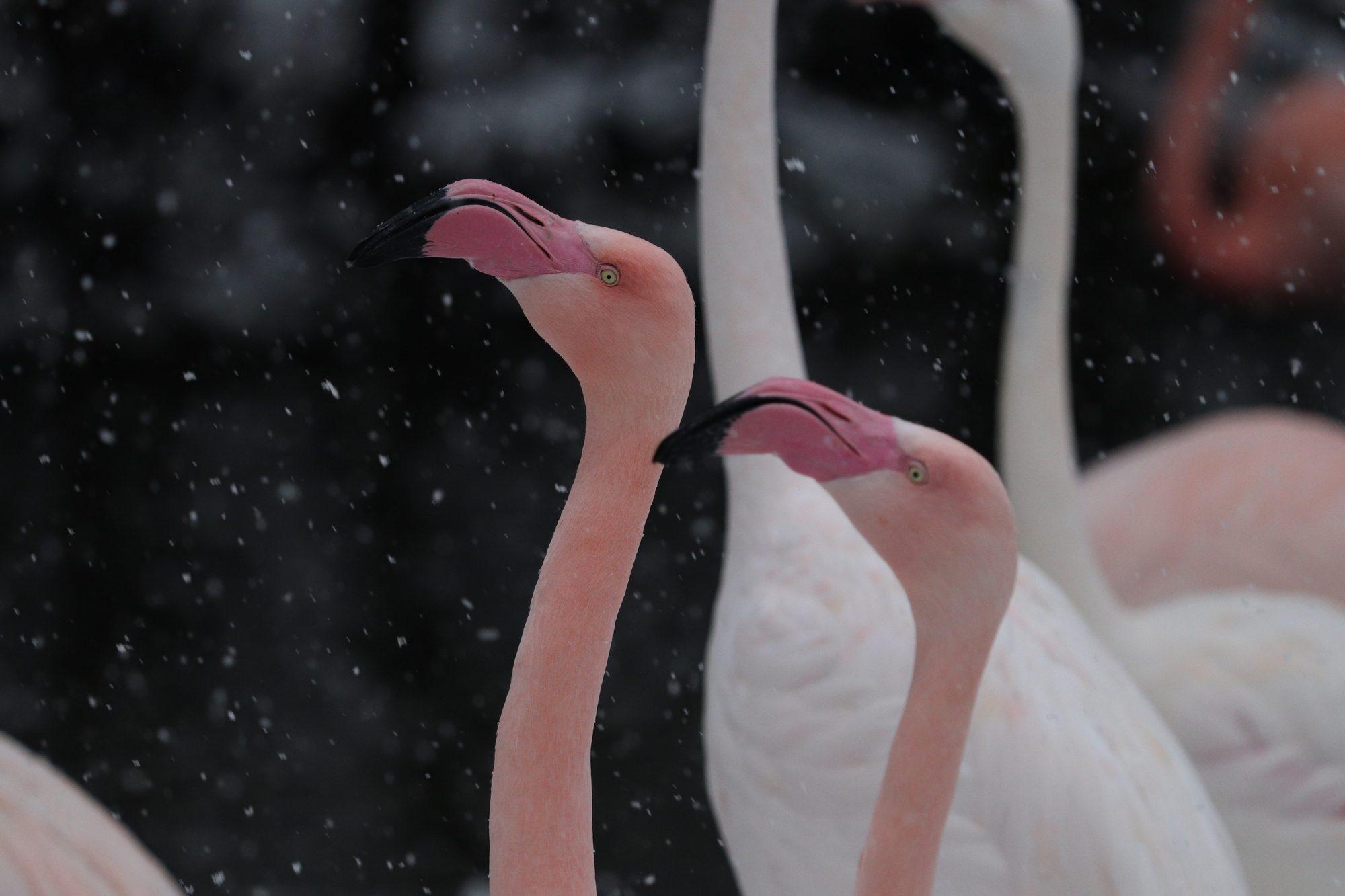 Rosa Flamingos im Tierpark Hellabrunn
