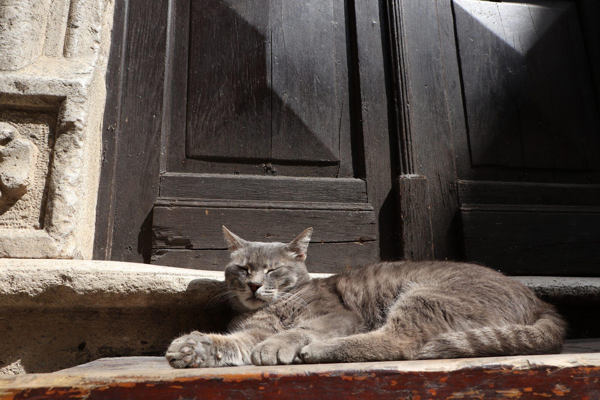Katze in Kotor