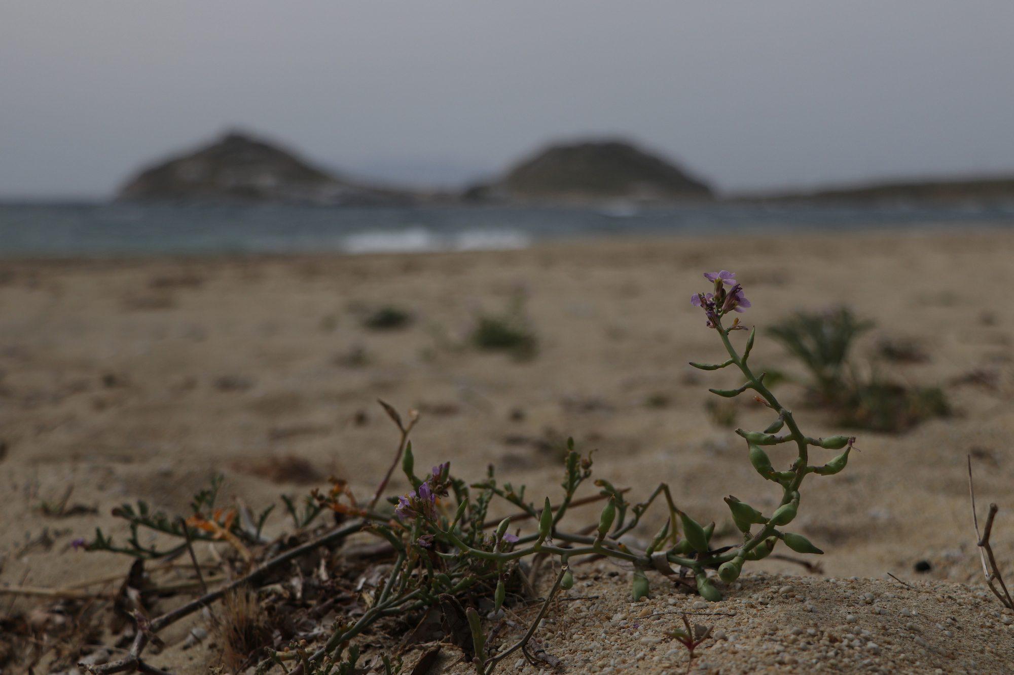 Strand von Kalafatis auf Mykonos