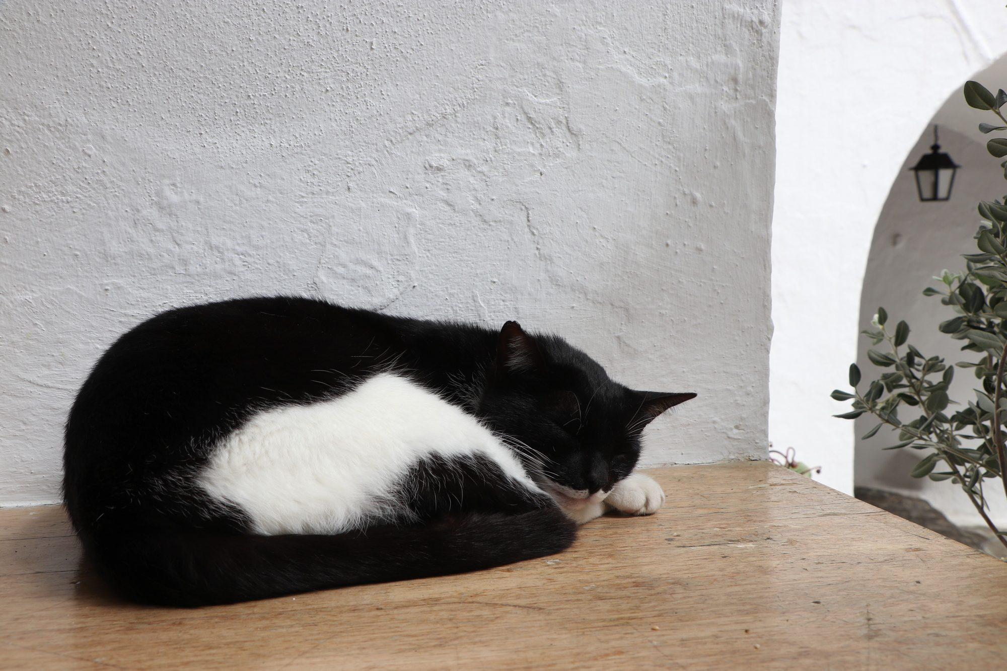 Katze in einem Kloster in Ano Mera auf Mykonos
