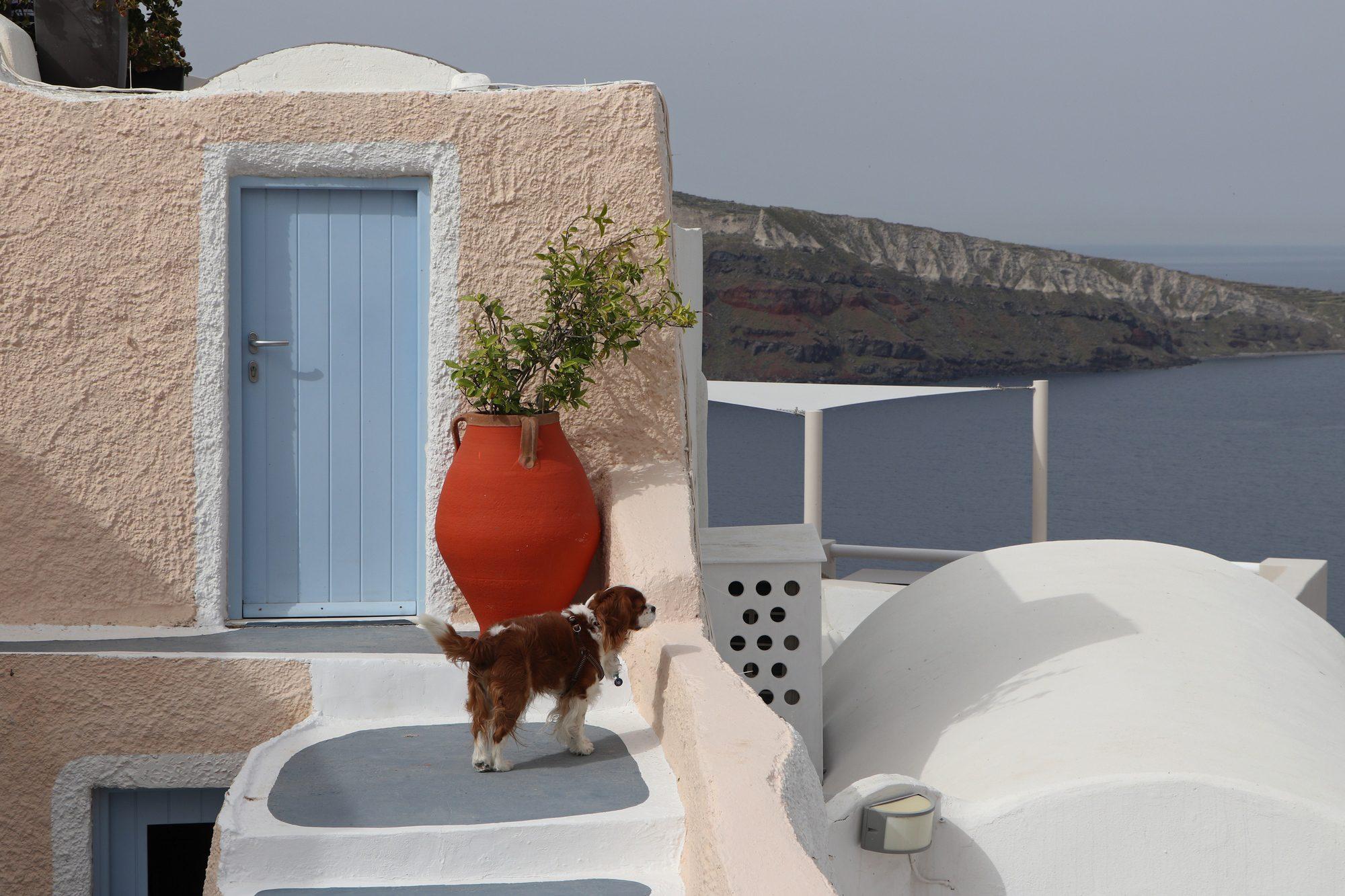 Hund in Oia auf Santorin