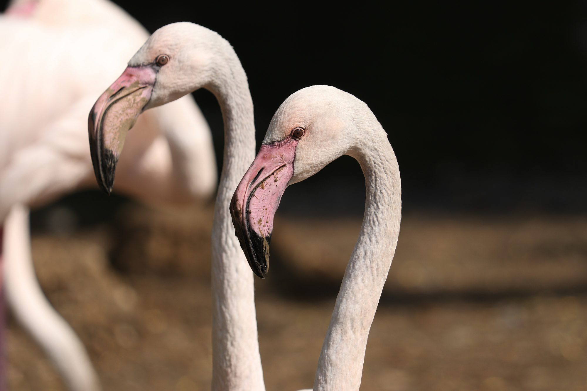 Rosa Flamingos im Zoo Augsburg