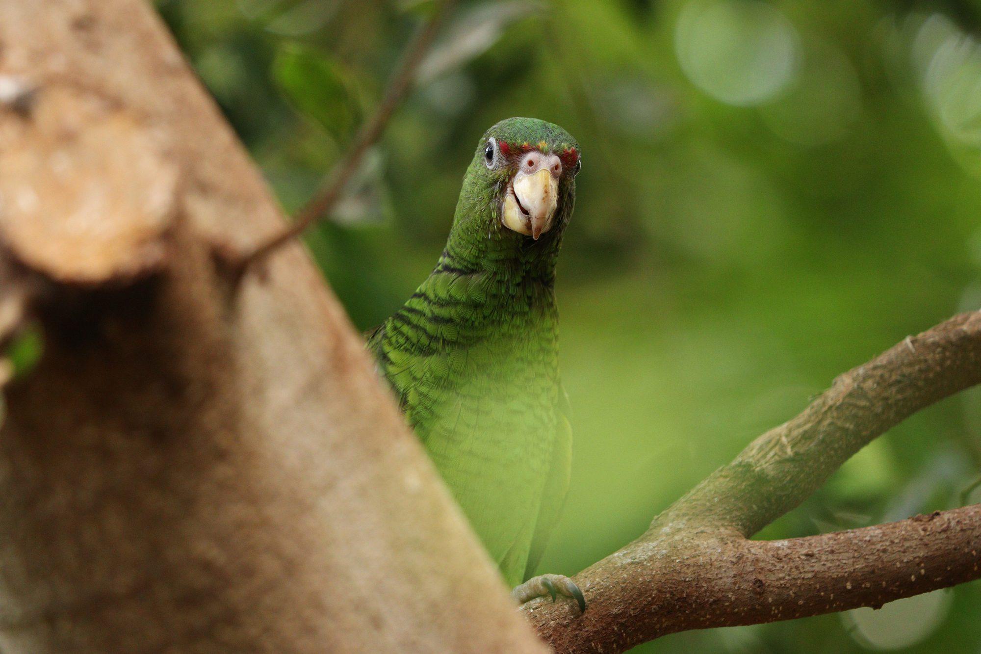 Papagei im Tierpark Hellabrunn