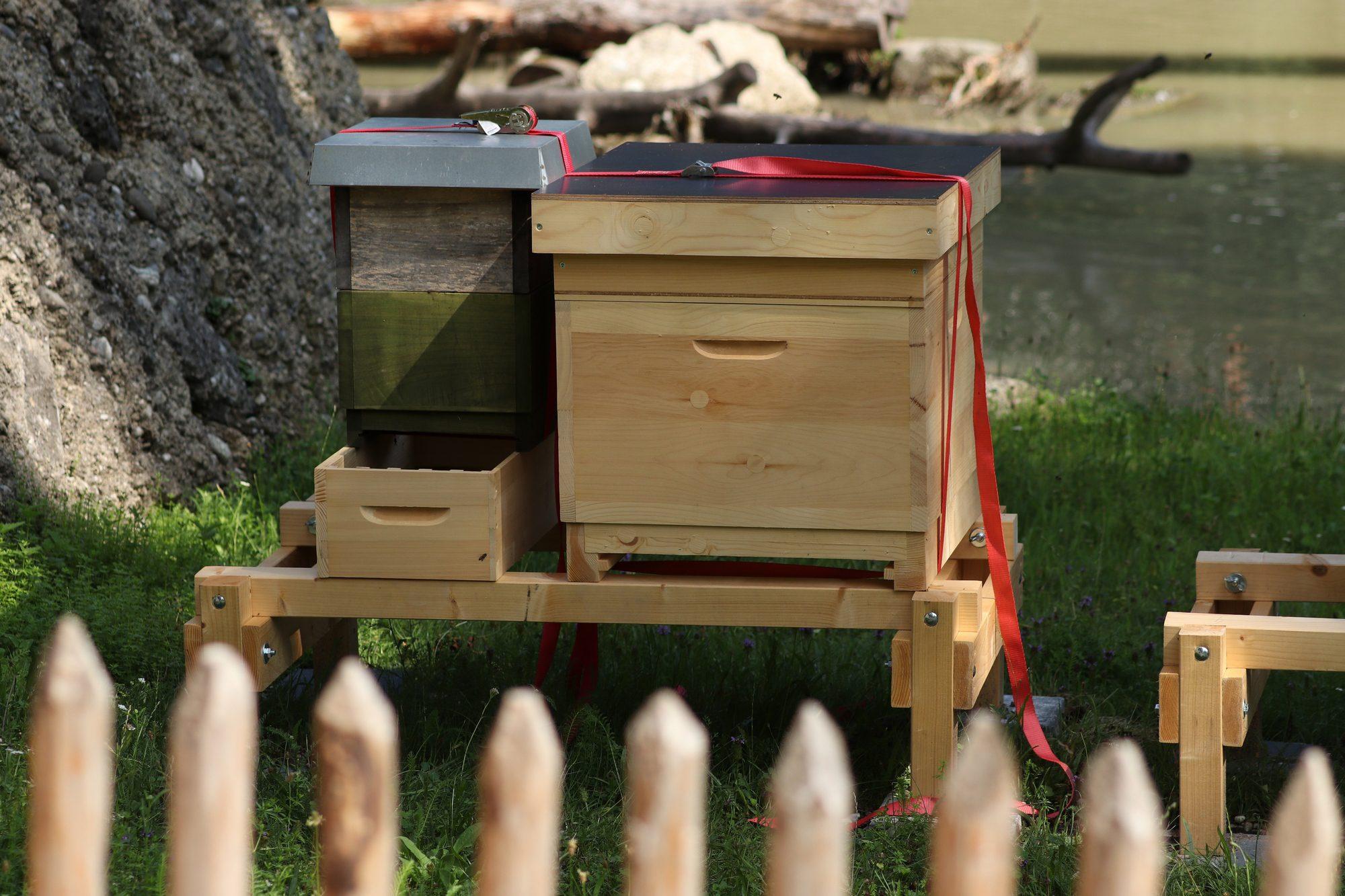 Bienen im neuen Mühlendorf im Tierpark Hellabrunn