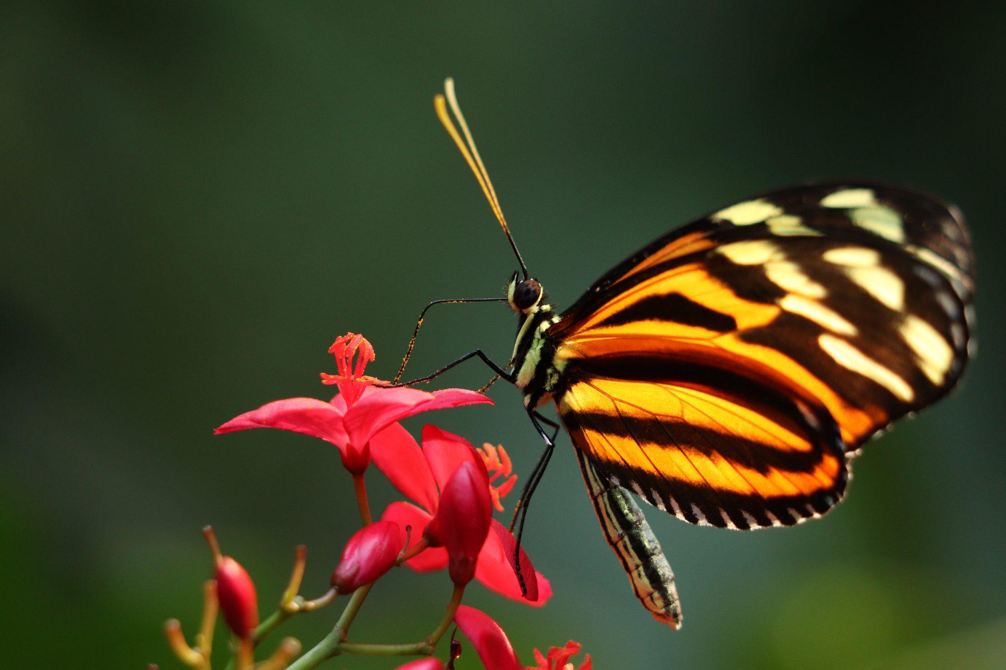 Schmetterling im Tiergarten Nürnberg