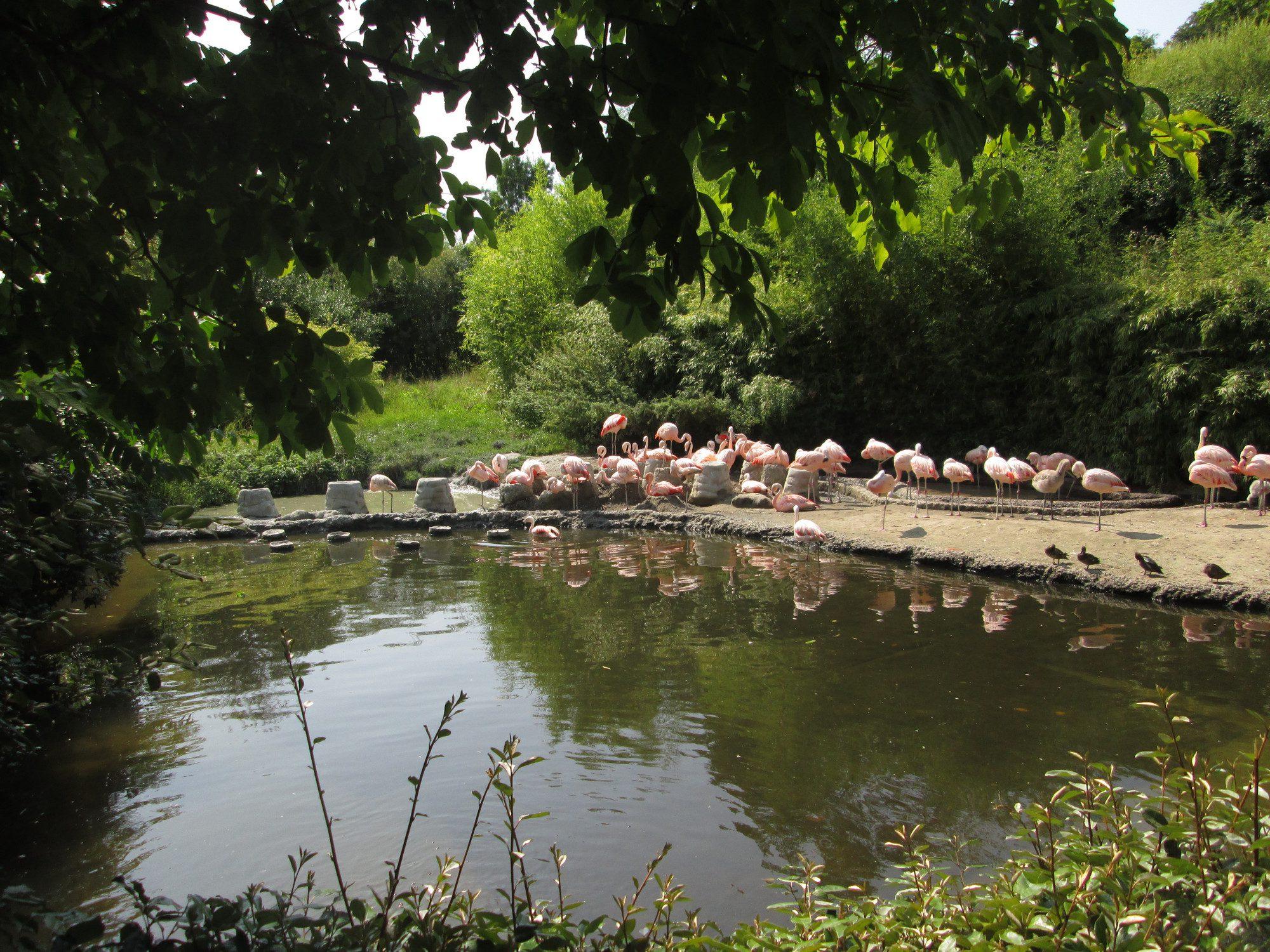 Pantanal Flamingoanlage im Zoo Zürich