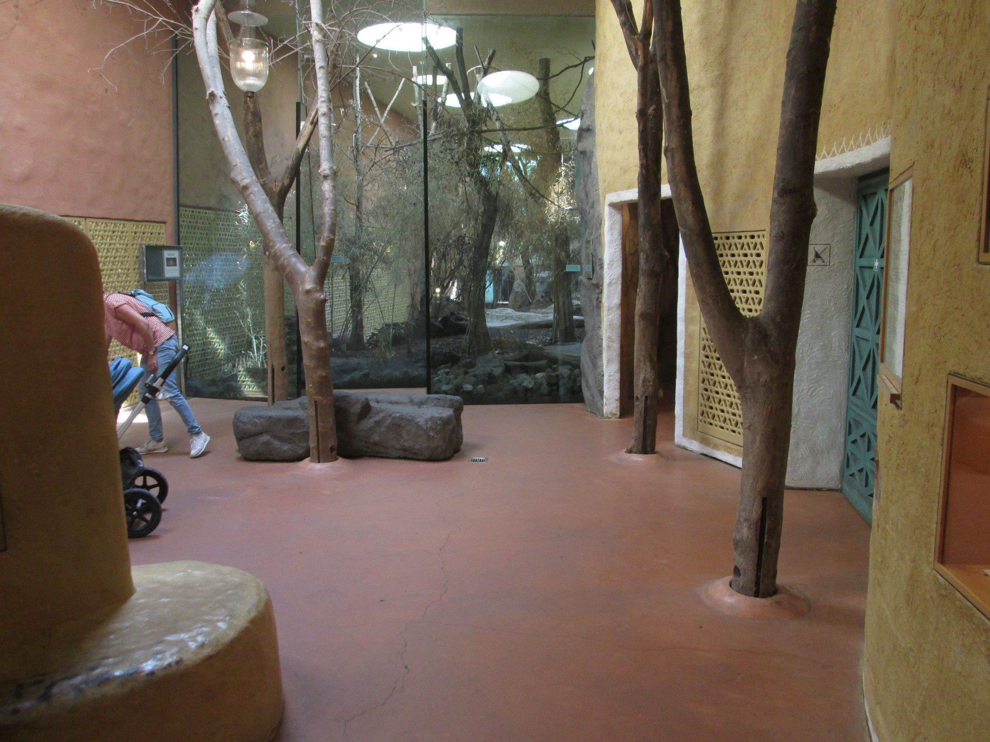 Asiatischer Löwe Innengehege Zoo Zürich