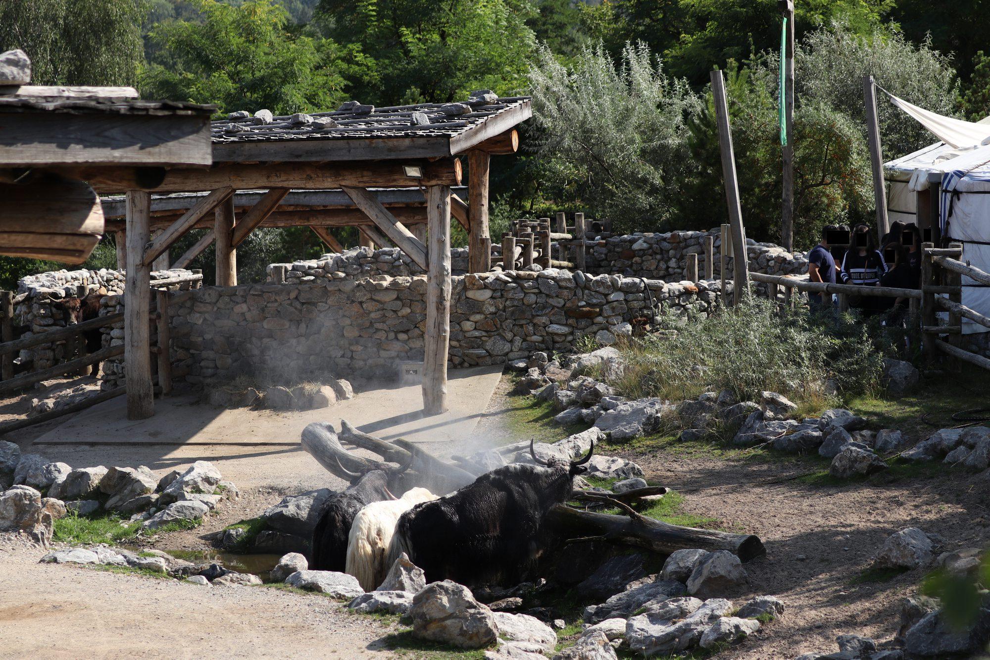 Mongolische Steppe Hausyak Kaschmirziege Zoo Zürich