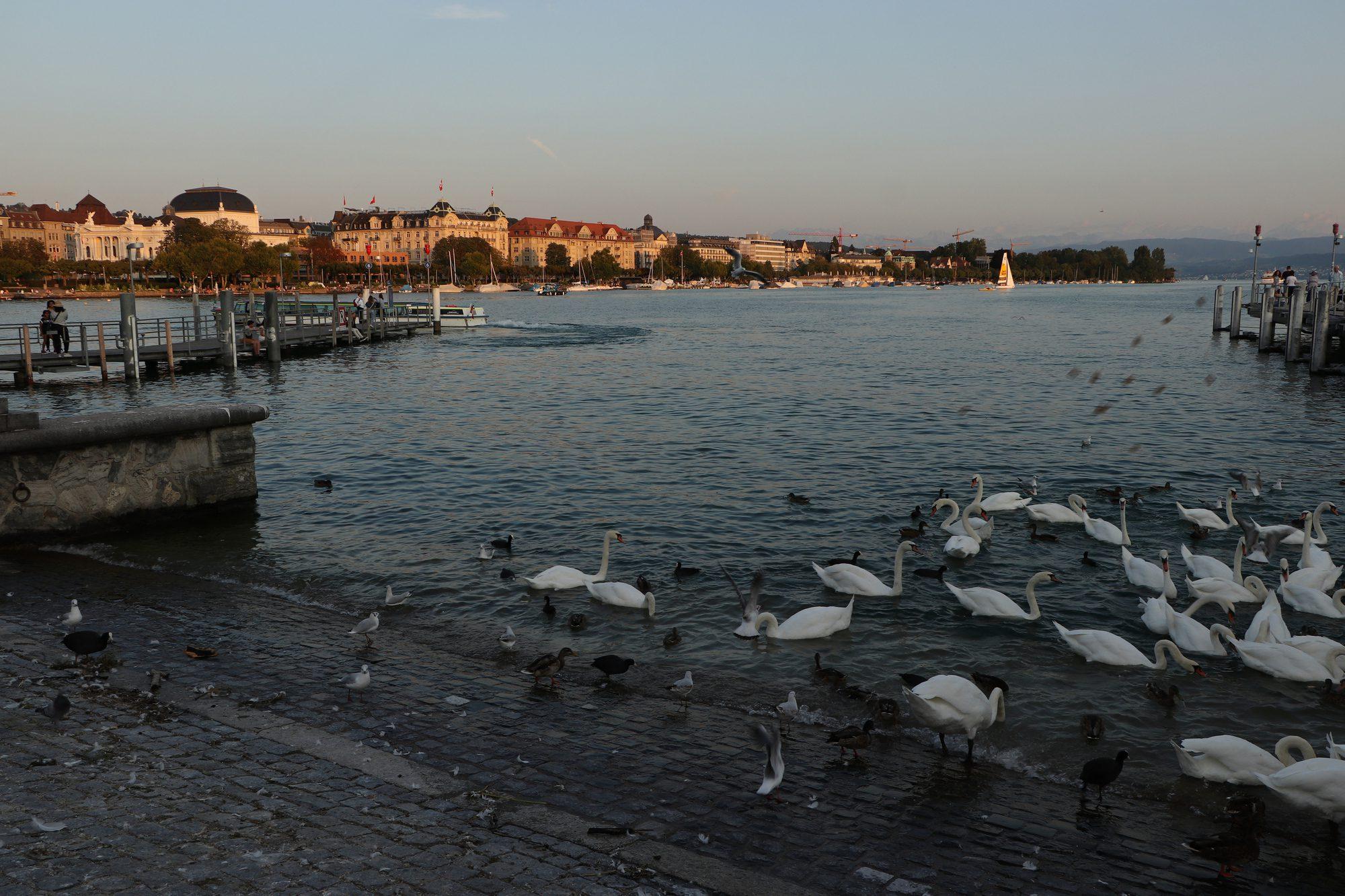 Der Zürichsee im Sonnenuntergang Zürich