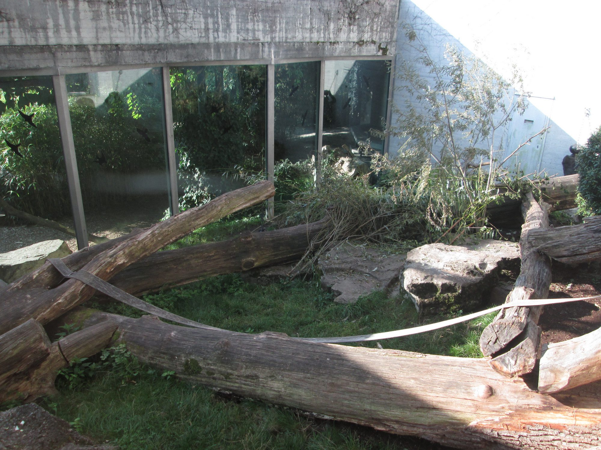 Gorillagehege Zoo Zürich