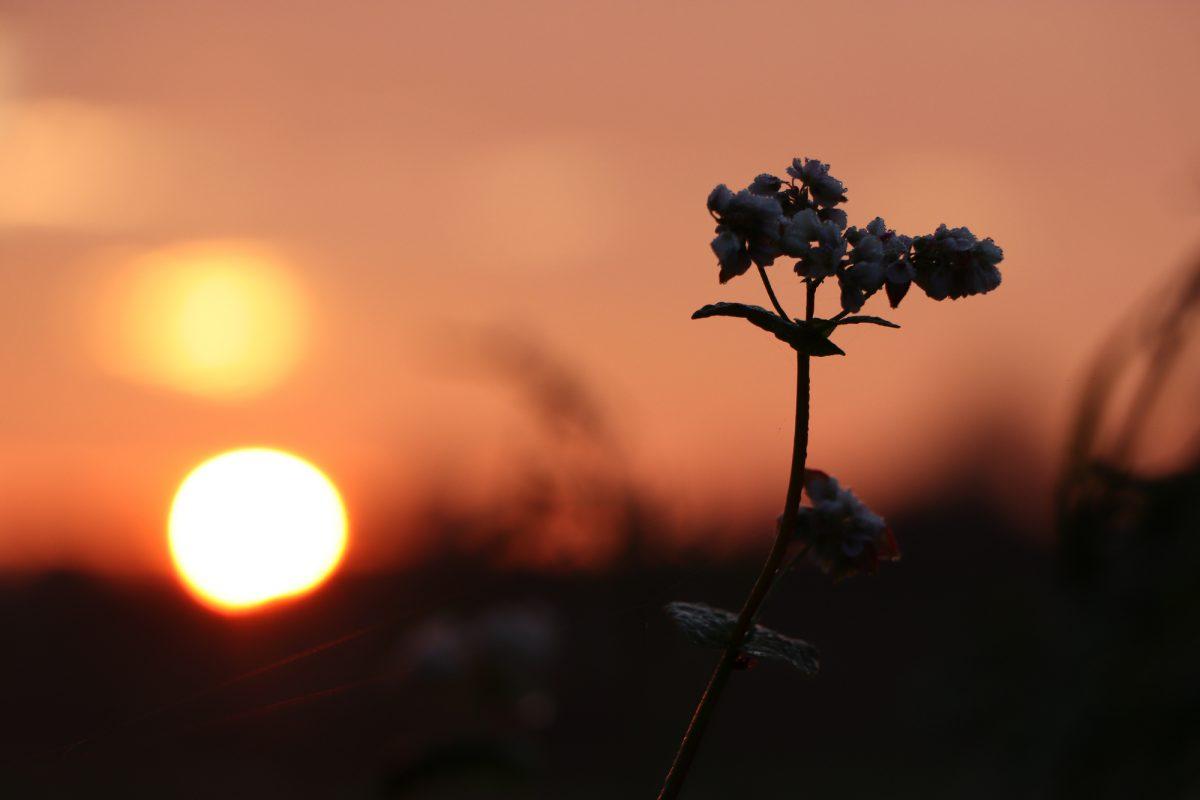 Sonnenaufgang Blume vor Sonne