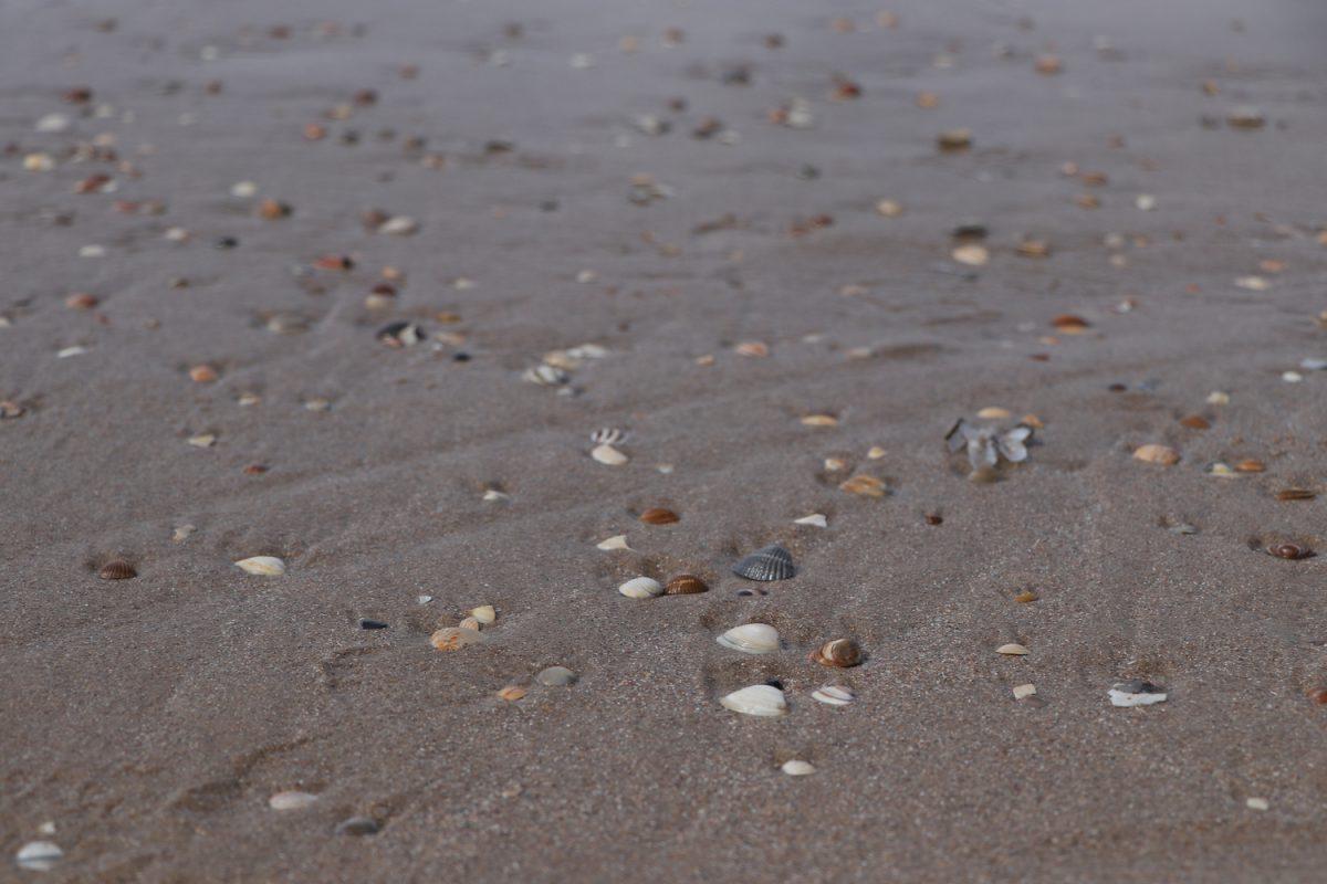 Muscheln am Strand von Egmond aan Zee