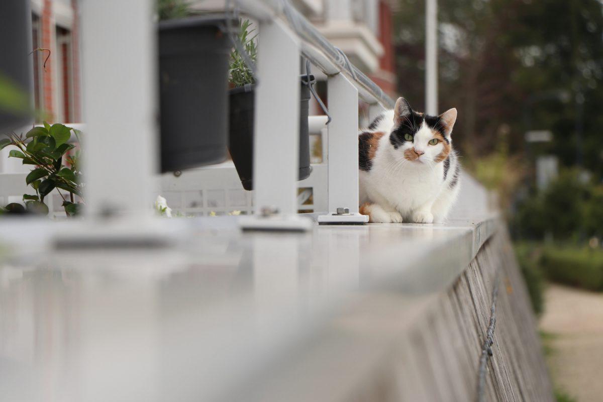 Katze in Hoorn in Nordholland