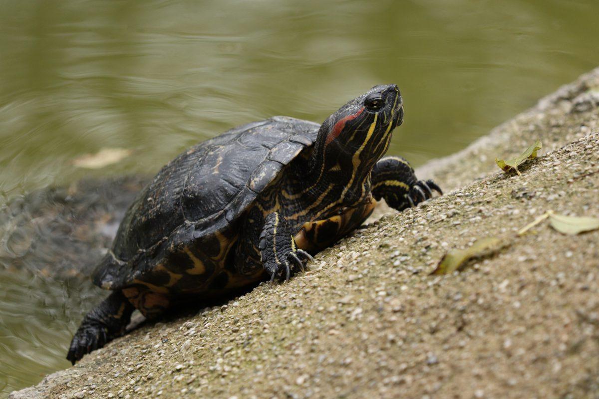 Schildkröte im Zoo Salzburg