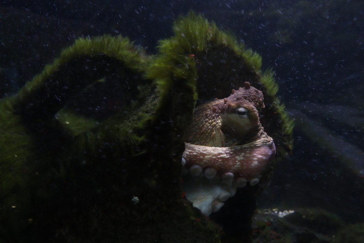 Krake im Tierpark Hellabrunn