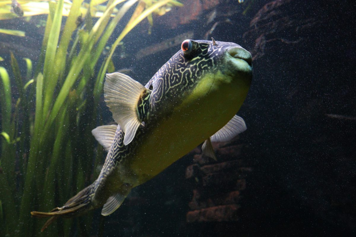 Fisch im Tierpark Hellabrunn