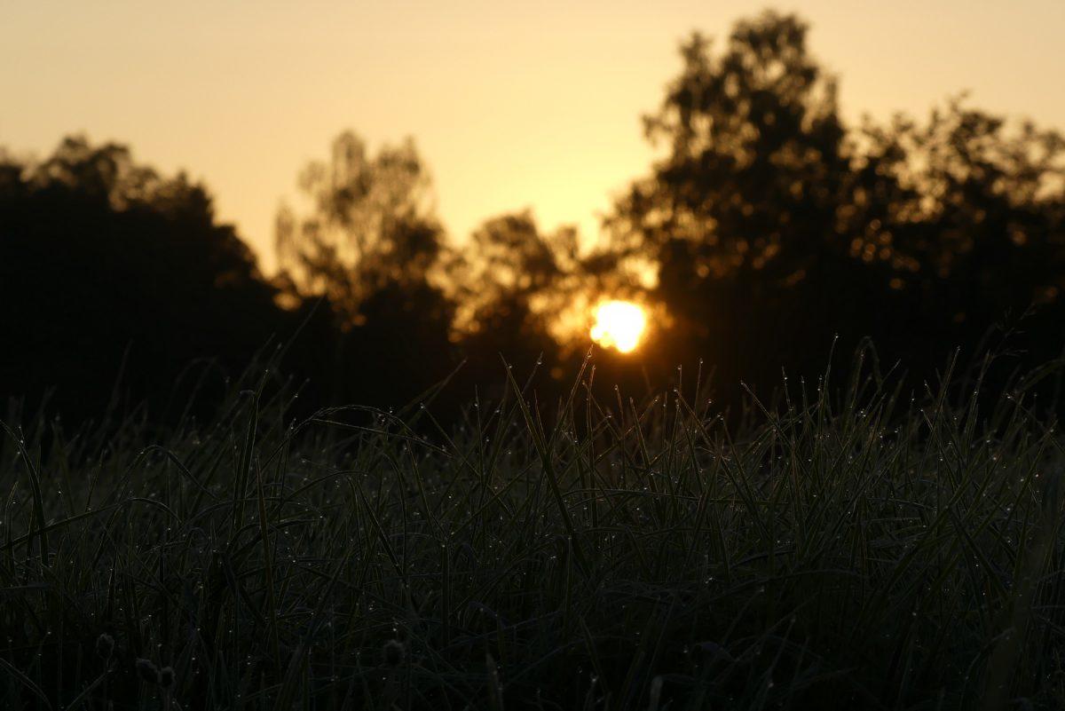 Sonnenaufgang im Herbst an der Emmeringer Leite in Eichenau