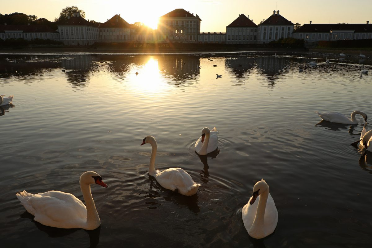 München Schloss Nymphenburg mit Schwänen zu Sonnenuntergang
