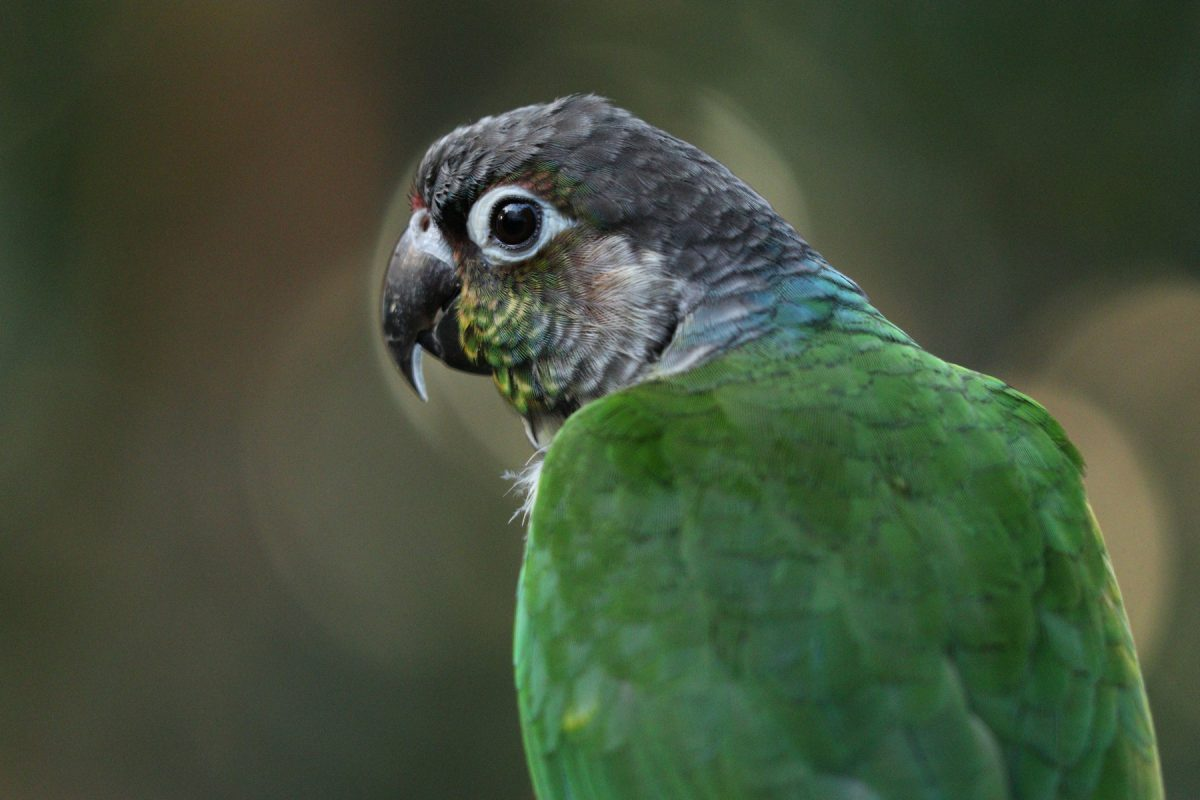 Papagei in der Dschungelwelt im Tierpark Hellabrunn