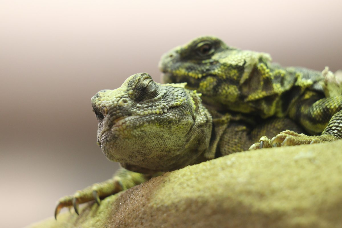 Bewohner des Reptilienhauses im Zoo Augsburg