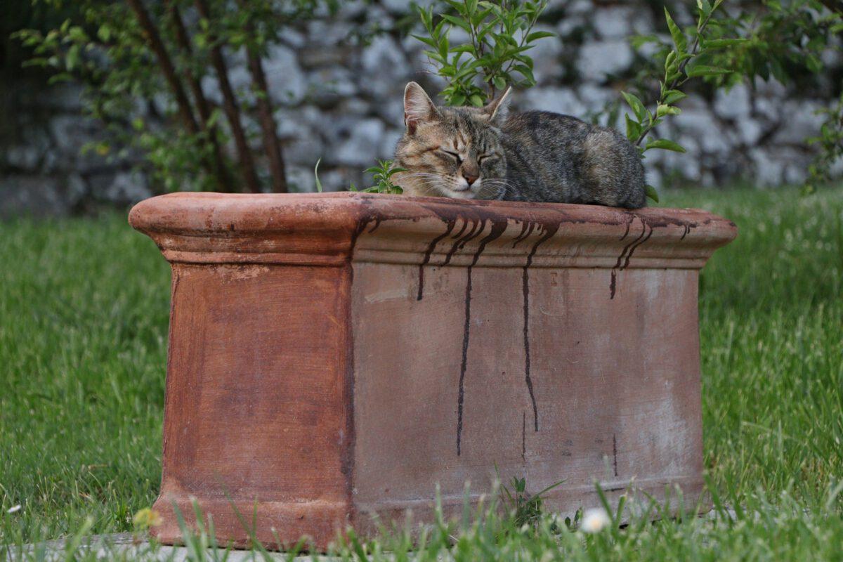 Toskana Katze in Blumentopf