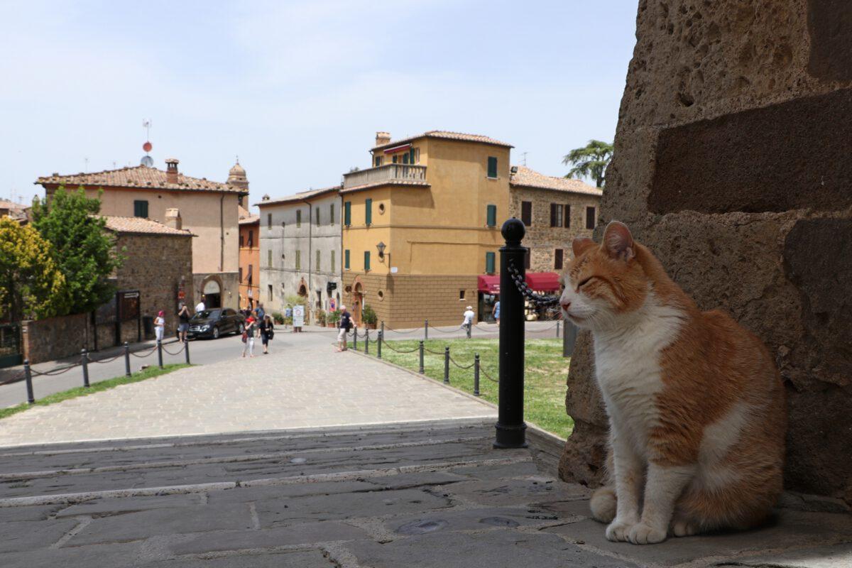 Katze in Montalcino in der Toskana