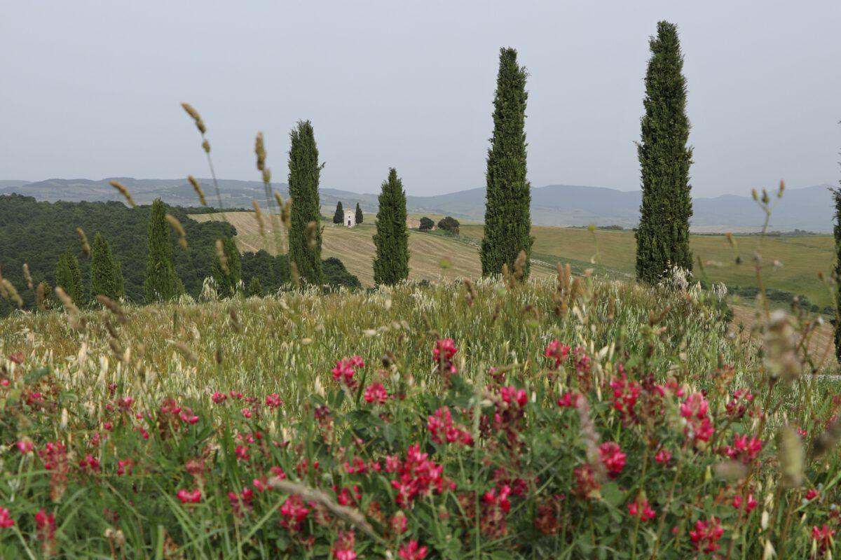Landschaft im Val d'Orcia in der Toskana