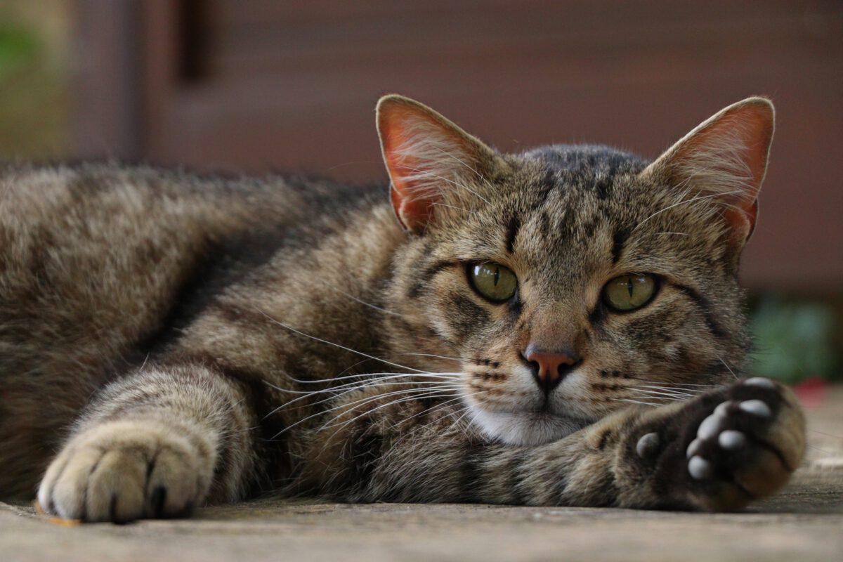 Katze in der Toskana