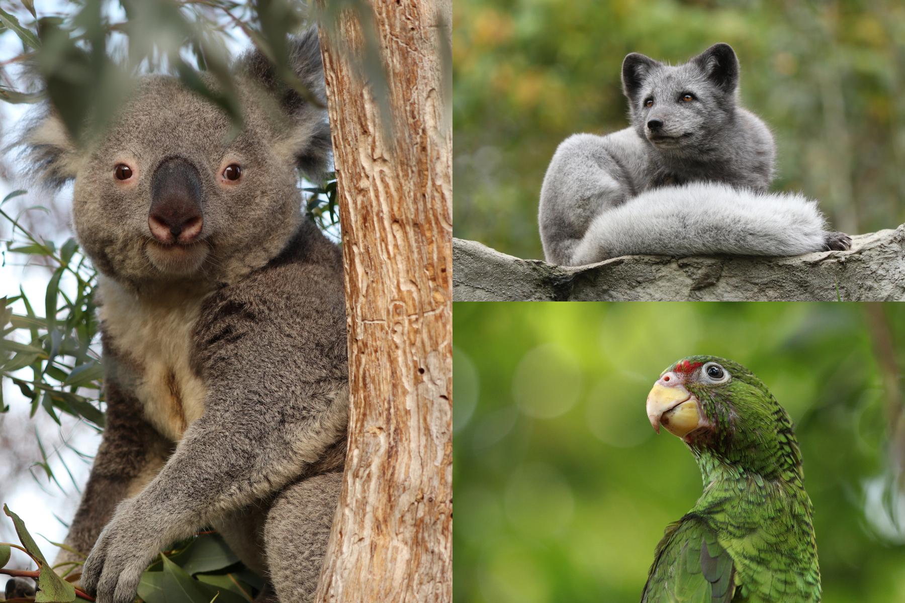 Titelbild Tipps für die Zoofotografie