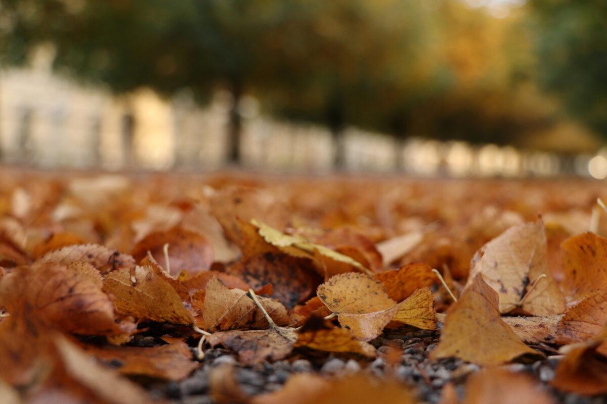 Herbstlaub im Hofgarten in München
