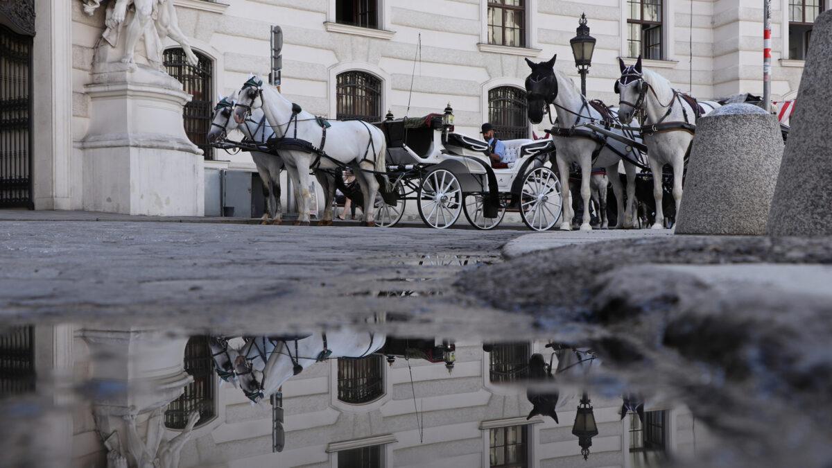 Pfützenspiegelung Fiaker vor der Hofburg in Wien
