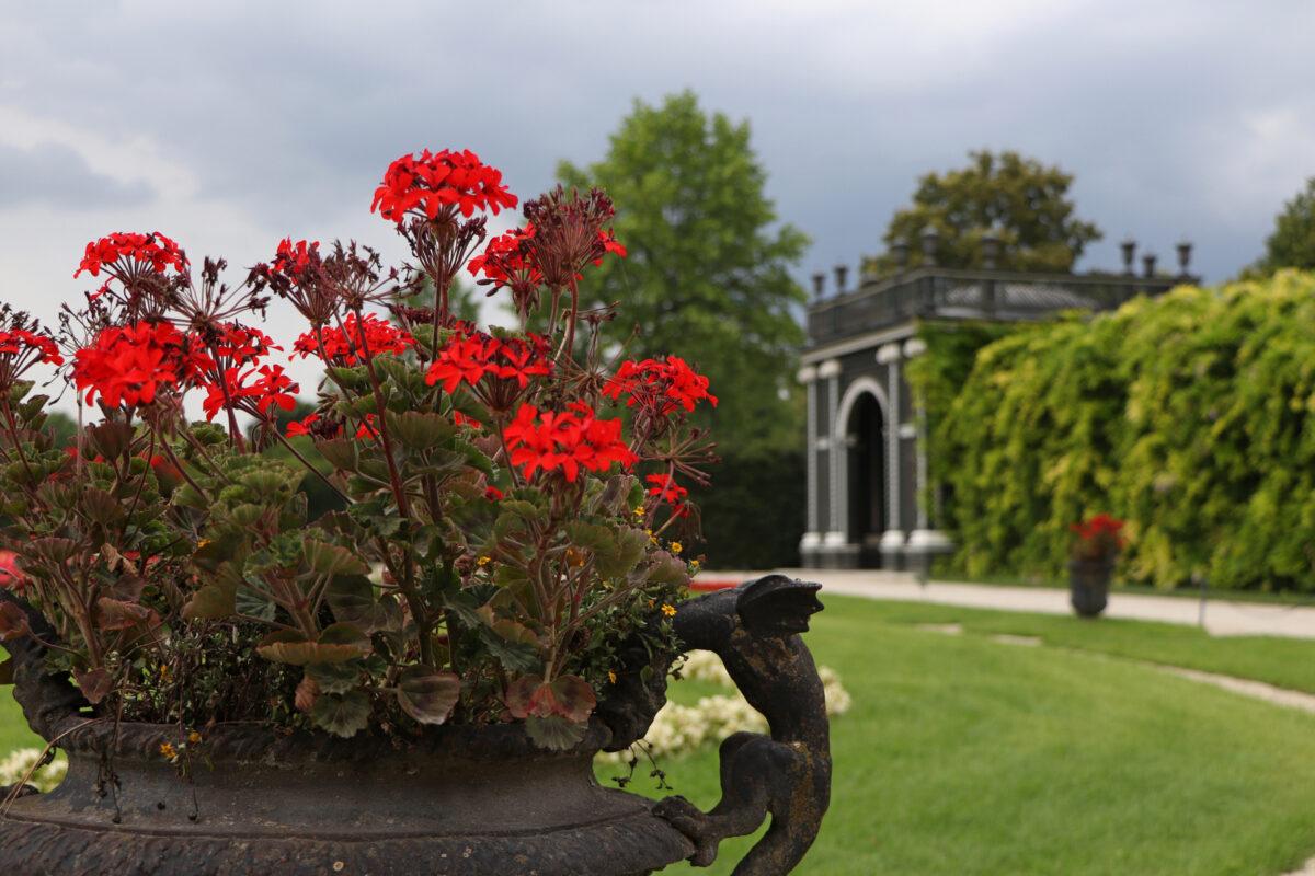 Blumen im Schlosspark Schönbrunn in Wien