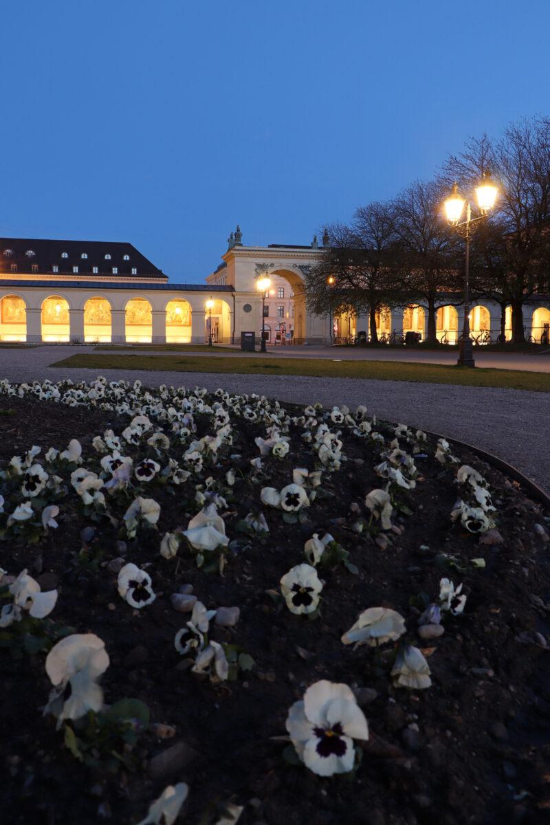 Blumenbeet im Hofgarten in München zur blauen Stunde