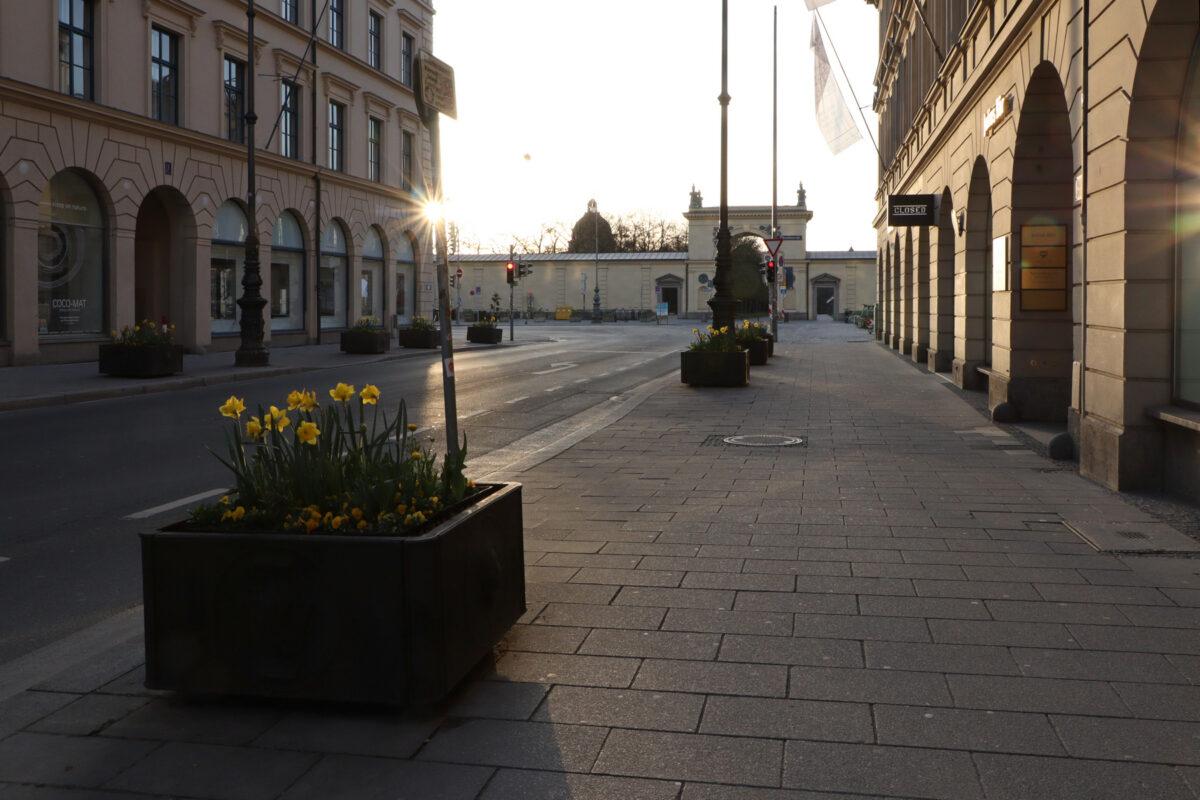 Morgens in der Brienner Straße in München im Frühling mit Blick in Richtung Hofgarten