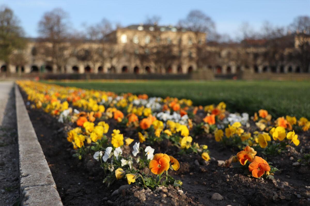Blumenbeet im Hofgarten in München