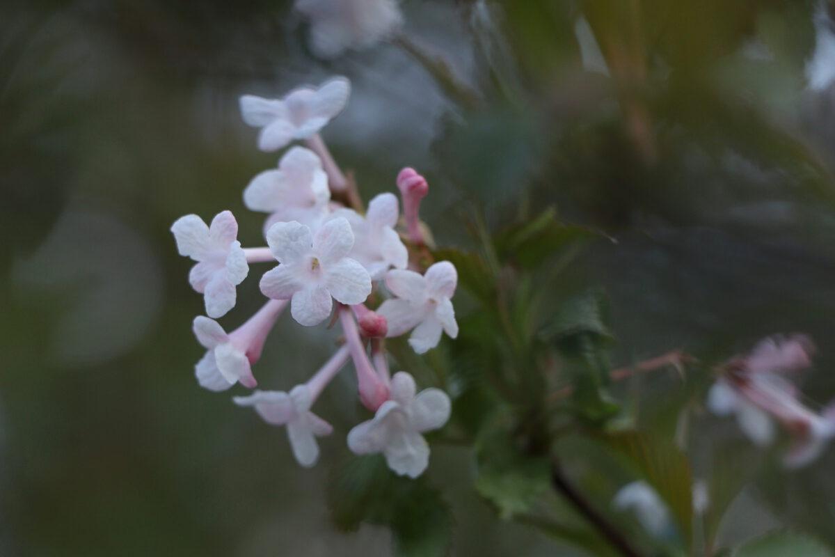 Blüten im Englischen Garten in München