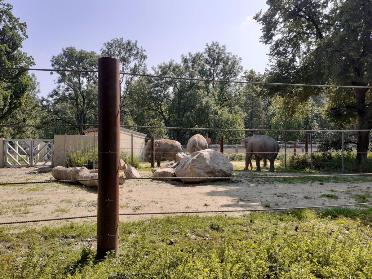 Neue Elefanten-Anlage im Zoo Augsburg