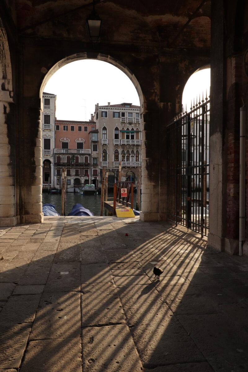 Frühmorgens am Canal Grande in Venedig